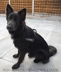 belgian shepherd groenendael for sale uk working dog harness uk for german shepherd 34 65