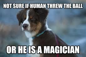 Magician Meme - my human is a magician meme guy