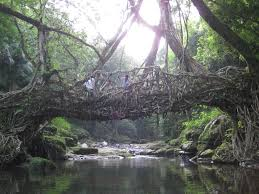 What Is Root Bridge Living Bridges Of Cherrapunji India These Are So Beautiful I Can