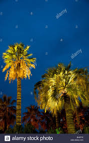 palm trees lit up at in city garden