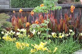 Urban Garden Santa Rosa Wildwood World June 2016