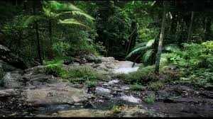 Under Canopy Rainforest by Rainforest Beneath The Canopy Part 02 Youtube