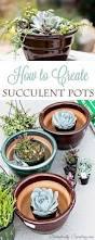Cute Succulent Planters by 88 Best Succulents Images On Pinterest Succulent Plants Growing