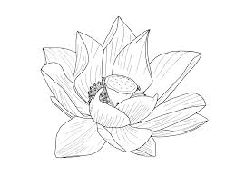 Simple Lotus Flower Drawing - lotus flower outline clipart u0026 illustrations pinterest