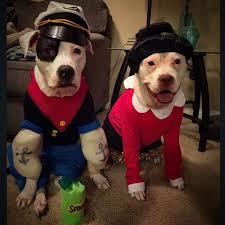 Popeye Olive Oyl Halloween Costumes 117 Dog Halloween Costumes Images Dog