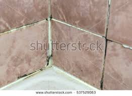 Mold In Bathroom Shower Black Mold Growing On Shower Grouted Stock Photo 537529063
