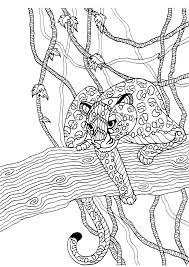 200 animal coloring images coloring books