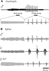 Anatomy And Physiology Songs Specific Control And Tuning Of The Pattern Generator For