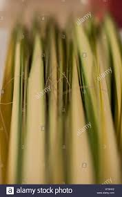 where to buy palms for palm sunday palms for palm sunday stock photo royalty free image 135304038