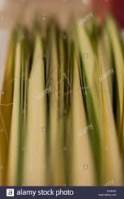 palm for palm sunday palms for palm sunday stock photo 135304038 alamy