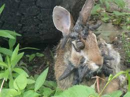 rabbit living in my friend u0027s back yard album on imgur