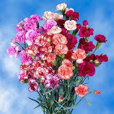 Wholesale Carnations Buy Spray Novelty Carnation Wholesale Price Online Global Rose