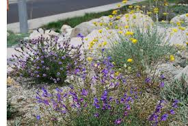california native plant society california native landscape design google search drought