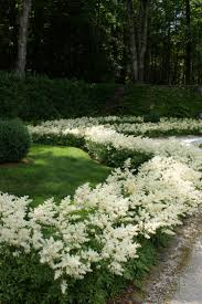 hedging plants budget wholesale nursery 66 best hedges and hedging plants images on pinterest garden