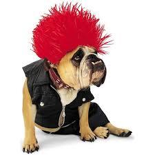Punk Rock Halloween Costume Ideas 172 Best Creatures In Costume Images On Pinterest Animals Dog