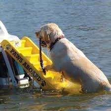 got a boat with a pup who likes to swim also good for elderly