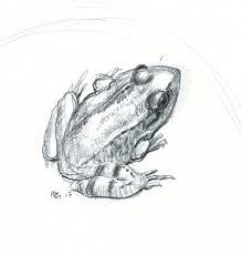 frogs wernerzimmermann ca