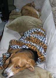 comment empecher chien de monter sur le canapé comment empecher chien de monter sur le canap 100 images les