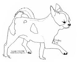 coloring pages chihuahua puppies chihuahua puppy nice chihuahua coloring page coloring pages