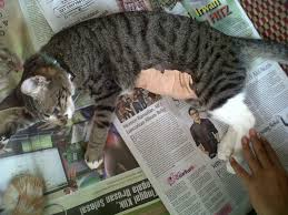 hukum memandulkan kucing soal steril lagi kisah pekerja lepas