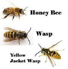 stinging insects wasps honey bees yellow jacket hornets
