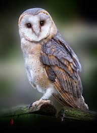 The Owl Barn Gift Collection 26 Best Owls Images On Pinterest Owl Barn Owls And Owl Pics