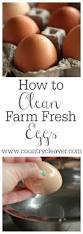 how to clean how to tuesday how to clean farm fresh eggs country cleaver
