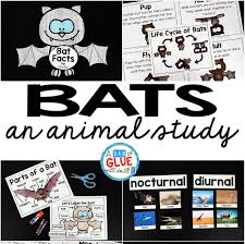bats an animal study a dab of glue will do
