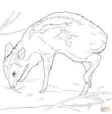 leg poppin mouse deer coloring page free printable coloring pages