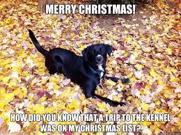 Christmas Dog Meme - christmas memes with dogs memes best of the funny meme