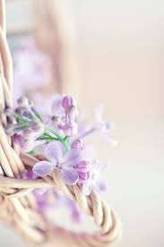 Lilac Flower by 96 Best Tea At Lilac Lane Cottage Images On Pinterest