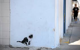 mysterious cat paintings on san pedro buildings stir passionate