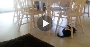 Cat Under Chair They Saw Their Cat Under The Table But When He Started Doing This