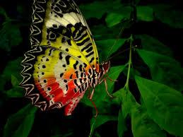 Unique Wallpaper by Unique Wallpaper Exotic Butterfly