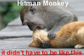 Meme Monkey - hitman monkey image gallery sorted by views know your meme