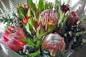 plants native to new york debra prinzing post slow flowers podcast all about protea u2013 a