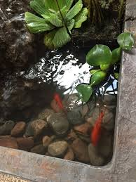 indoor ponds keep your fish happy with an indoor pond call today 231 439 0067