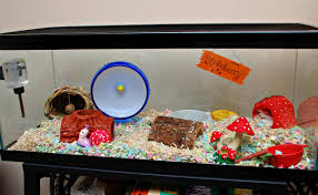 How Much Is A Hamster Cage Hammy Homes Hammy Happenings