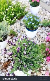 small rock garden pictures home decorating inspiration