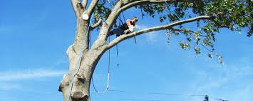 newnan tree removal and trimming coweta tree services