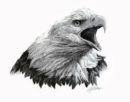 drawn eagle artwork pencil and in color drawn eagle artwork