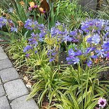 Gardening Trends 2017 Gardening Trends