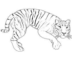 tiger u2013 alcatix com