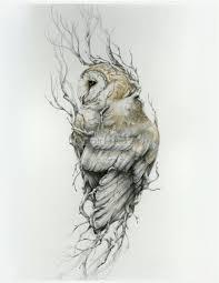 barn owl 11 x 14 reproduction of original drawing