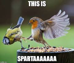 This Is Sparta Meme - this is sparta imgflip