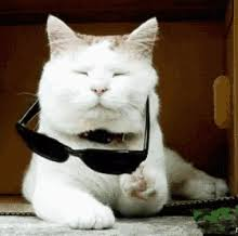 Sassy Cat Meme - sassy cat gifs tenor