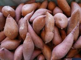 gracious monologue on potatoes plus yams colin purrington to