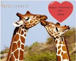s day giraffe happy s day the giraffe files