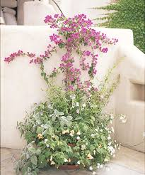 Plants And Planters by 13 Container Gardening Ideas Potted Plant Ideas We Love