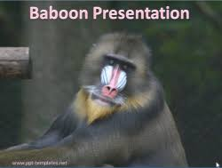 mandrill templates 28 images here s your mandrill template